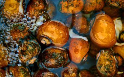 Il cibosofo e le lumache