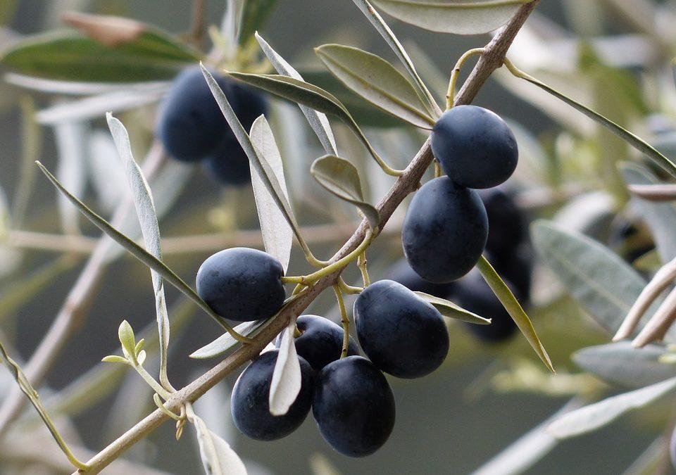 Il cibosofo e le olive