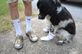 """""""Mang' li cani""""?   No, """"pur' li cani""""! Chiaromonte ha sdoganato il sandalo con il calzino: riuscito il primo flash mob"""