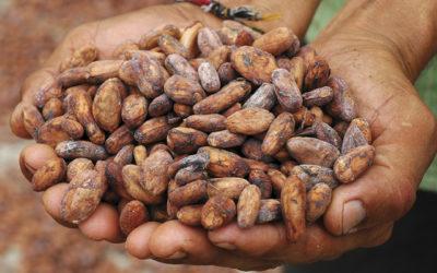 Il Cibosofo e il cacao