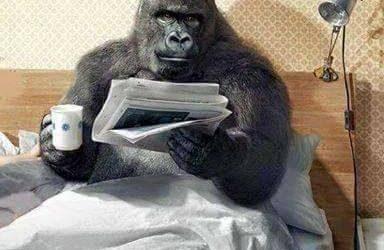 Dal primato della politica alla politica dei …primati!